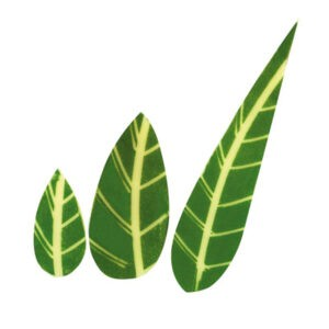 Hoja Verde de Chocolate Blanco de Hillbo